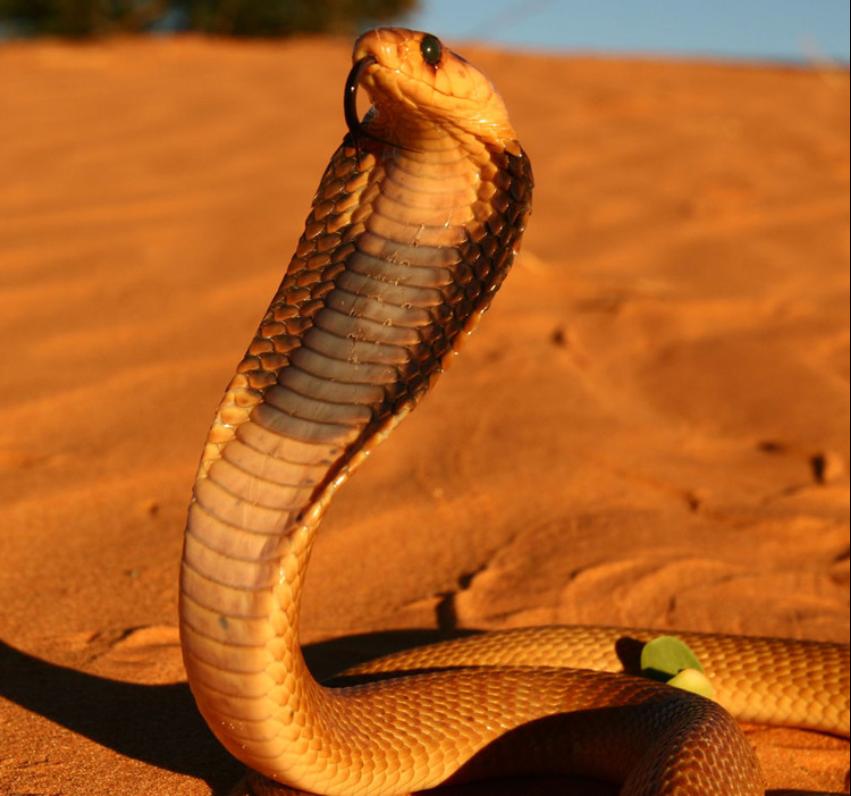 蛇2.png