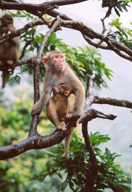 猴2.jpg