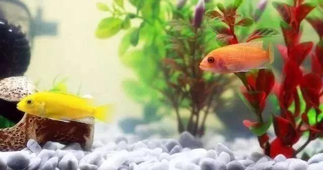 鱼缸.jpg