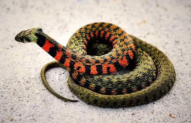 蛇6.jpg