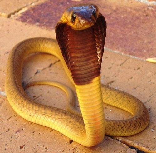 蛇7.jpg