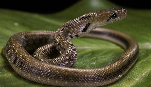 蛇8.jpg
