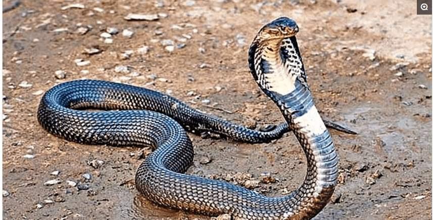 蛇9.jpg