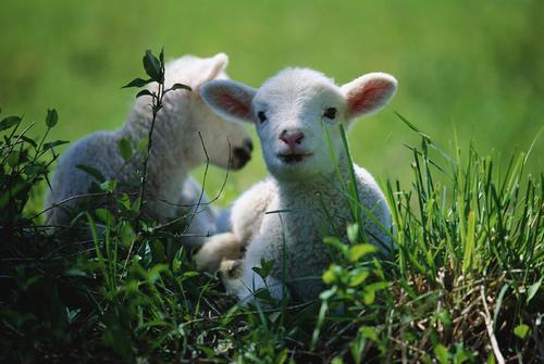 羊20211.jpg