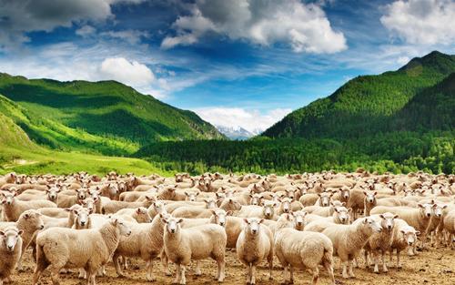 羊20212.jpg
