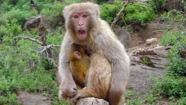2021猴1.jpg