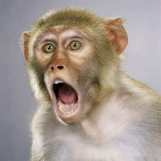 2021猴4.jpg