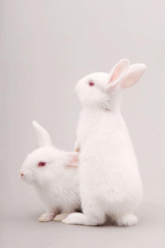 小兔子.png
