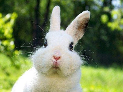 小兔子2.png