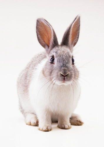 小兔子3.png